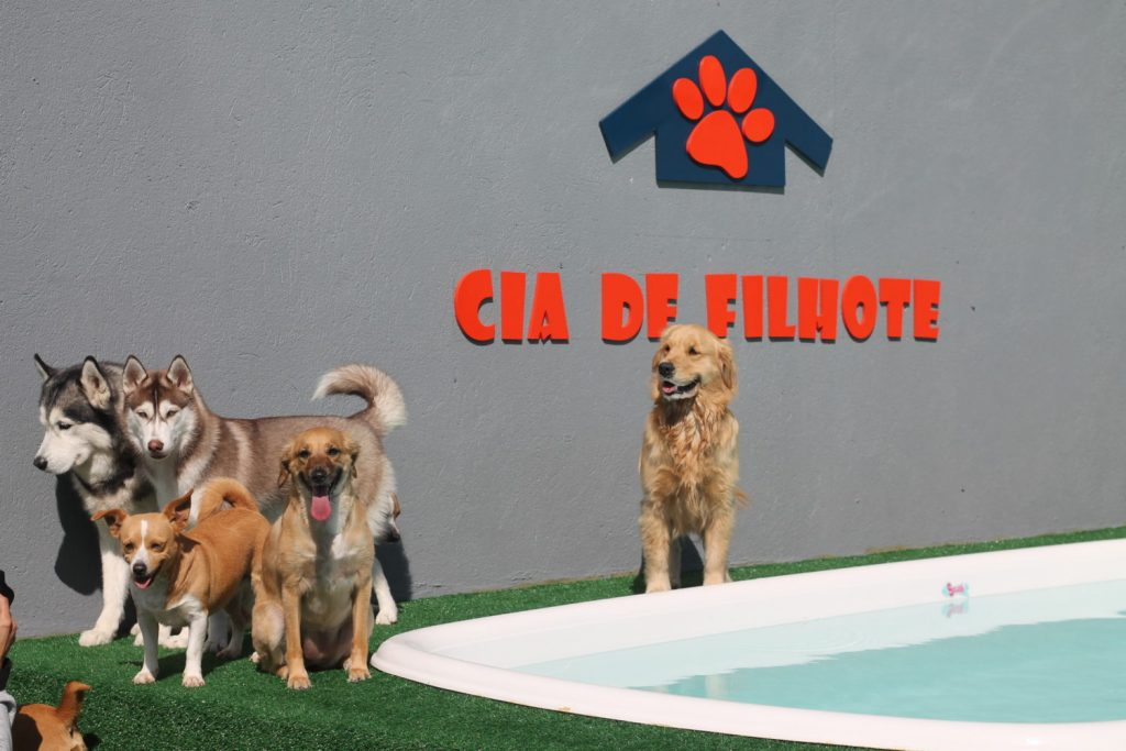 Pet-shop-Morumbi-1024x683 Hotel